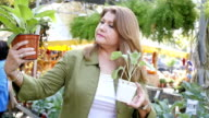 Beautiful mature Hispanic woman compares two plants in farmer's market or garden center video