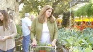 Beautiful mature Hispanic woman pushes shopping cart down aisle in plant nursery or farmer's market video