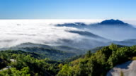 Beautiful Mist Flowing On Valley At Inthanon National Park Of Chiang Mai, Thailand video