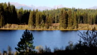 Beautiful Mountain Lake and Forest video