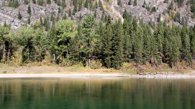 Beautiful Mountain River Along Pine Forest video