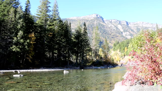 Beautiful Mountain River and Forest video