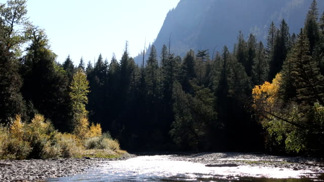 Beautiful Mountain River Flowing through Forest video