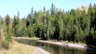 Beautiful Mountain River Flowing Through Pine Forest. video
