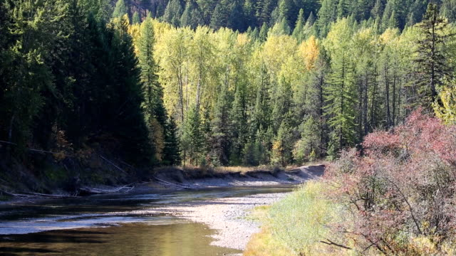 Beautiful Mountain River in Birch Forest video