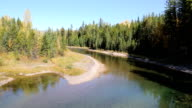 Beautiful Mountain River Moving Through Pine Forest video