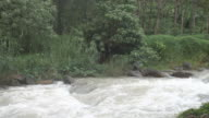 Beautiful nature of Thailand jungle rain forest with tropical plants and waterfalls of small mountain river running video
