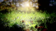 Beautiful nature with lens flare loop video