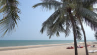 Beautiful palm tree on the tropical beach and sea video