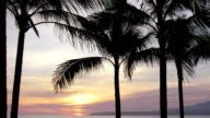 Beautiful Palm Tree Sunset Time Lapse video