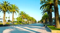 Beautiful palm trees alley, Salou, Spain, Europe video