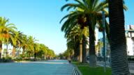 Beautiful palm trees, Salou, Spain video