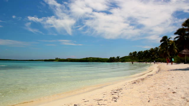 Beautiful Paradise Desert Island with palm trees and beach video