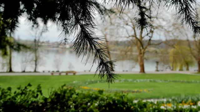 Beautiful park on Lake Bodensee. video