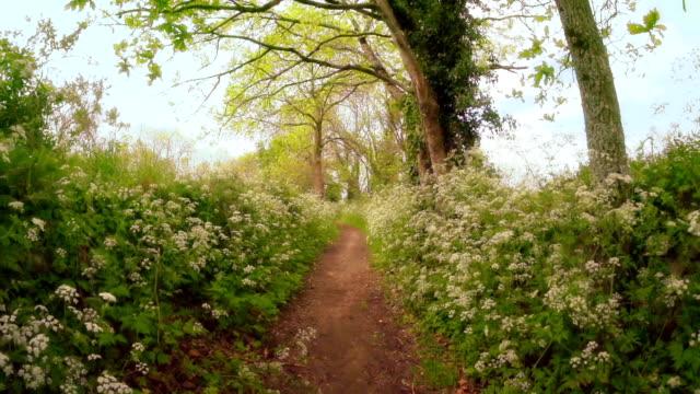 Beautiful Path video