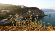 Beautiful plants growing on a cliff in the sunset light video