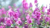 beautiful purple flowers blooming video