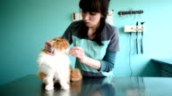 Beautiful red cat in a veterinary clinic video