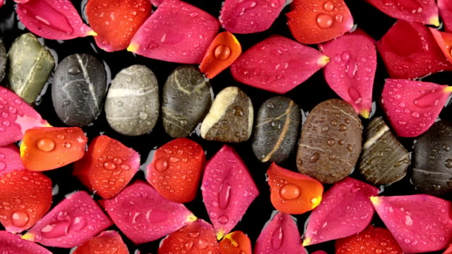 Beautiful relaxing panorama rose petals with dew drops and stones, spa concept video