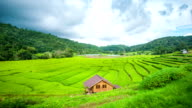 Beautiful Rice Terrace among Mountain with Moving Cloud. video