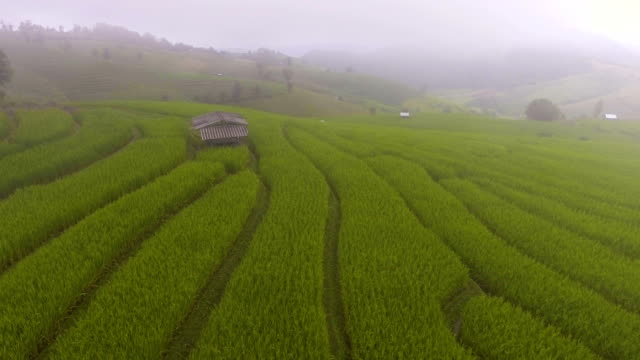 Beautiful Rice Terraces with Mist and Mountain in Morning video
