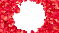 Beautiful Rose-petals transition. Useful for greetings and gifts. video
