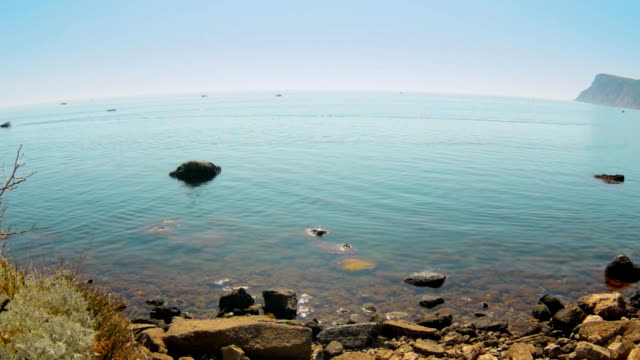 Beautiful sea landscape.marine algae video