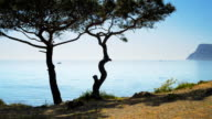 Beautiful seascape and Crimean pine on a background of the sea (Time lapse) video