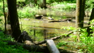 Beautiful small pond in a forest in spring on a sunny day video