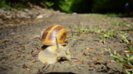 Beautiful Snail HD video