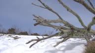Beautiful snow mountain landscape, Australia video