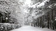 Beautiful snowfall video