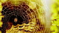 Beautiful spider web with lens flare video