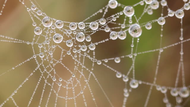 Beautiful spider's web with drops at the morning video