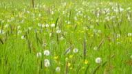 Beautiful Spring Meadow with Wildflowers - camera pan video