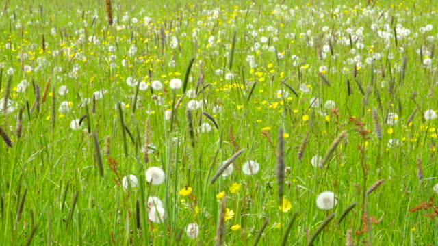 Beautiful Spring Meadow with Wildflowers - camera pan video
