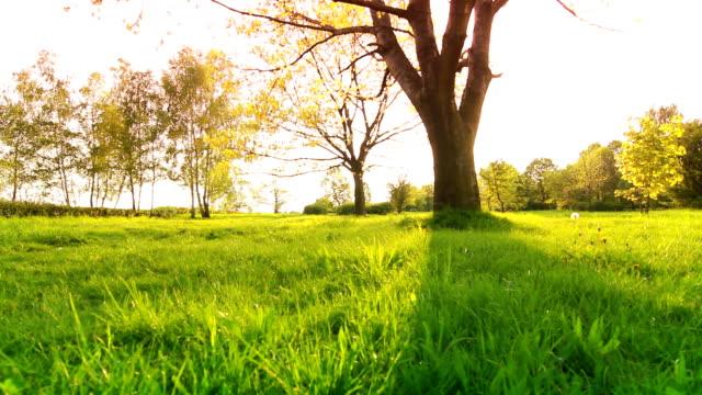 Beautiful spring tree video
