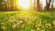 DS Beautiful springtime video