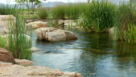Beautiful Stream and Boulders Dolly-In video