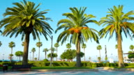 Beautiful summer scene with palm trees video