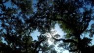 Beautiful summer sun shining through big majestic live oaks canopies video