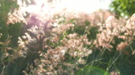 Beautiful Sunset Against Meadow Flowers video