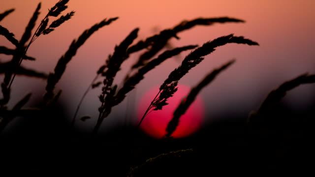 Beautiful Sunset and Tall Grass video