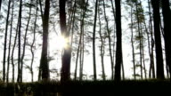 Beautiful sunset in the woods video