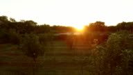 Beautiful sunset over a small lake and apple orchard video