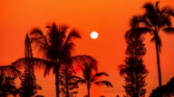 Beautiful sunset over the palm trees video