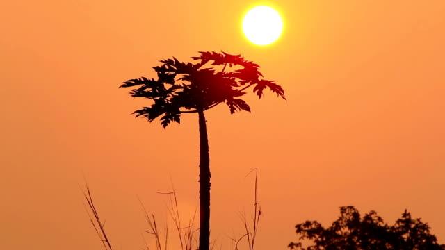 Beautiful Sunset / sunrise video