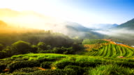 Beautiful sunshine at misty morning mountains north thailand video