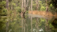 Beautiful Swamp and Reflection in the Panna Tiger Reserve, India. video