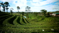 Beautiful tea plantation video